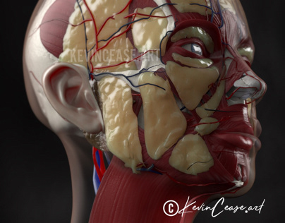 Fat pads of the face for aesthetic practitioners