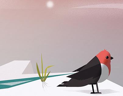 Robin illustration