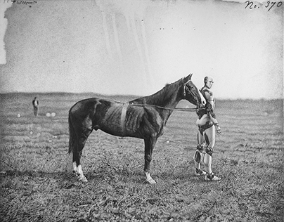 Droid and horse