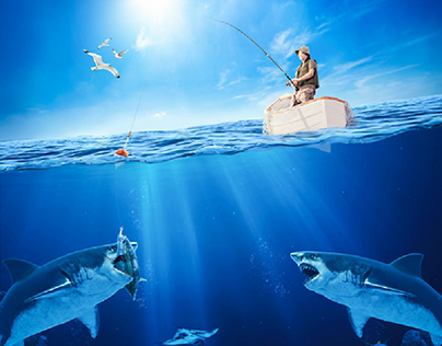 Fishing With Sharks