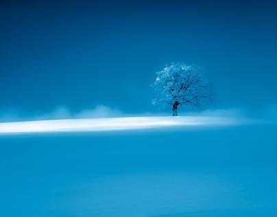 La part des arbres