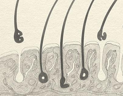 Neril - Anti Hair Lose