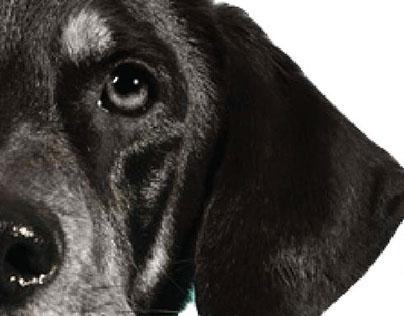 Dog Walk-a-thon