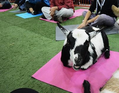 Goat Yoga @ Agribition