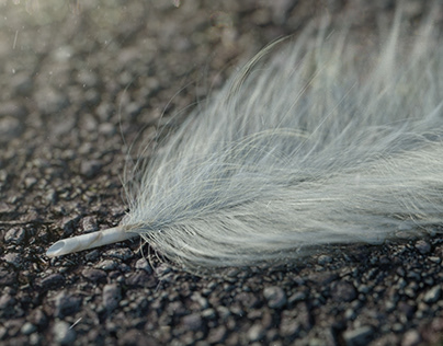 Feather CGI - C4D - Octane