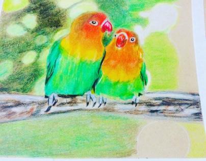 Lovebirds color pencil drawing in progress