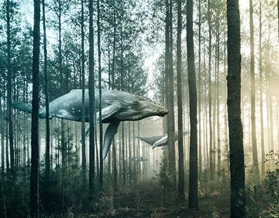 Surrealist Nature