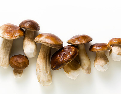 white beautiful big porcini mushrooms on a white