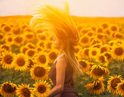 Golden sunflower fields