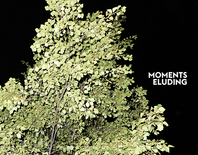Moments Eluding | PETRIe