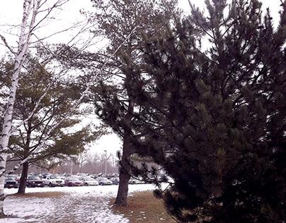 A Walk Through Snowy Cobleskill