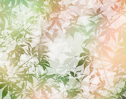 Koyo ~ Acer Hues