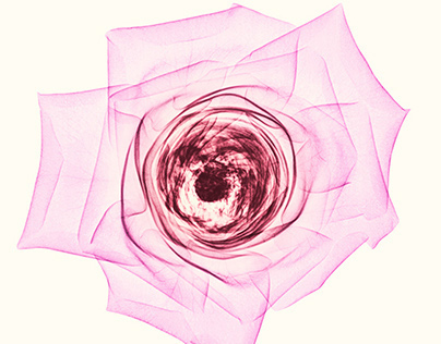 X-rays of Flowers 01