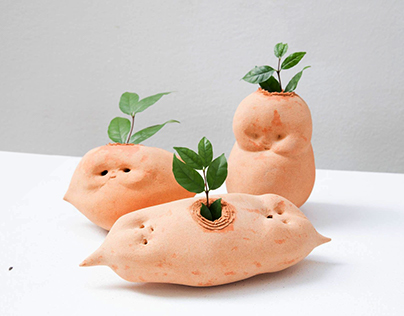 Baby Daikon / Flower pot