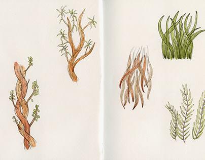 Imaginary Plants (spread two)