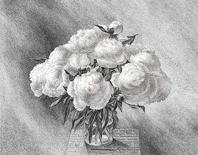 «Marshmallows»