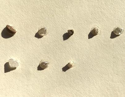 Rocks I Found In My Shoe