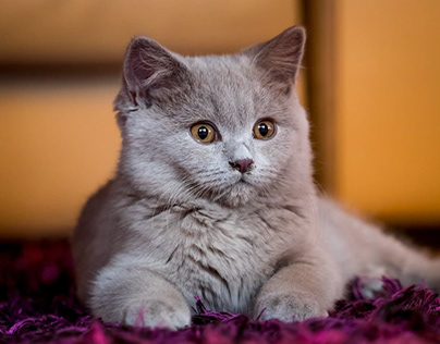 Sữa tắm cho mèo - Thương hiệu hàng đầu mỹ phẩm sữa tắm
