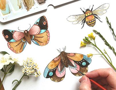 Watercolor designs | Wolfie&Willow