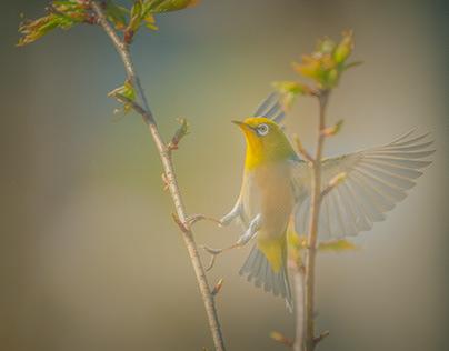 Birdie Project