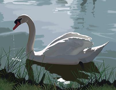 Swan | Digital Illustration
