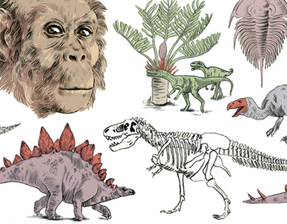 Illustrations for Natural History Museum
