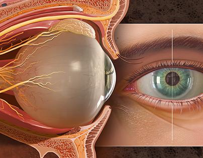 Eye and Orbital Cavity Anatomy