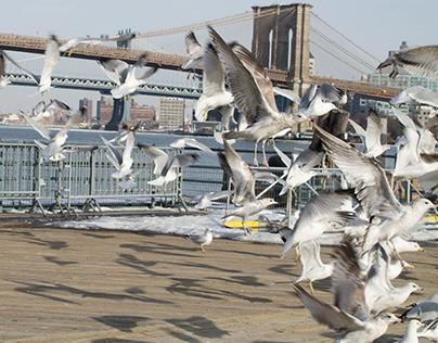Seaport Gulls