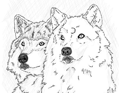 Máni, Úlfr y sus cachorros