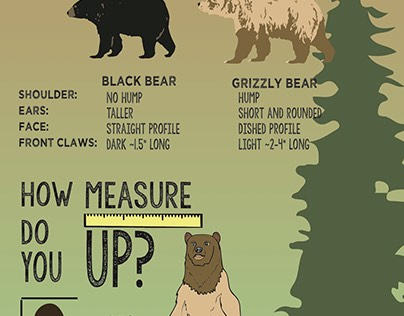 Bears Infographic