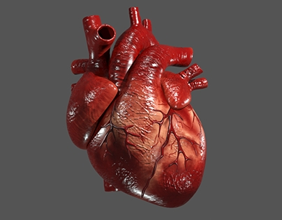 human heart model and animation