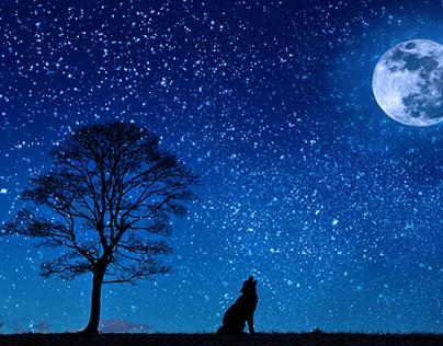 Dog Wolf Yelp/ Moon Tree /Night Starry Sky