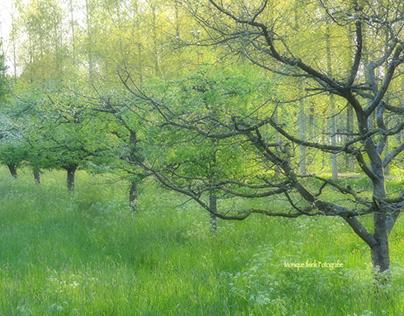 Linschoten spring, visual poetry.