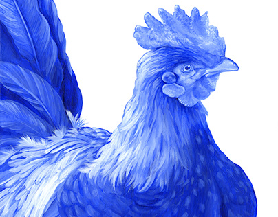 Blue Rooster (Blooster) 1