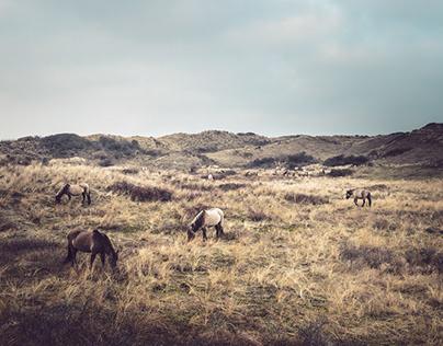 Dunes & horses