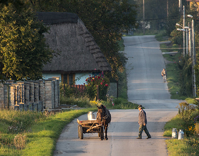Traditional milk carrying in countryside. Poland.