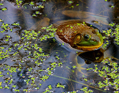 The Frog that Became a Prince