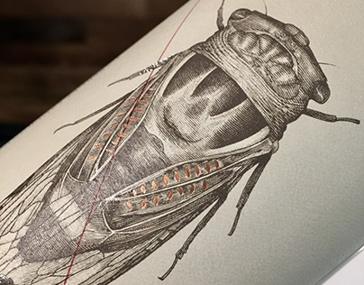 The Fableist Wine Label Illustrated by Steven Noble