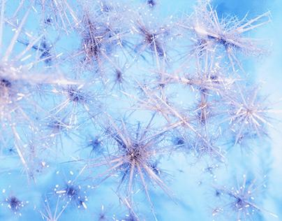 Frosty Microscopic Snowflakes