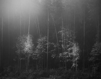 Small Trees II
