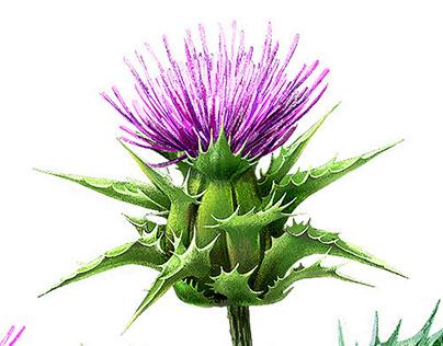 Medicinal plants. Bayer TV spot