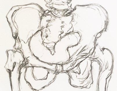 Live drawing sketch of pelvic bone