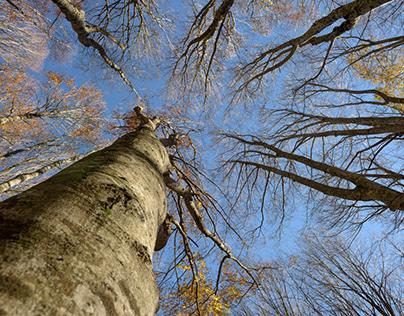 Casentinesi forest UNESCO heritage
