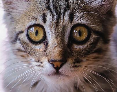 Zuki The Kitten