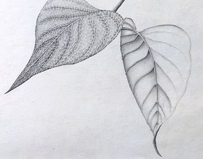 Pencil Drawing Leaves