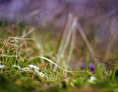 Messenger of spring.