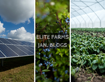 Elite Farms January Blog Headers