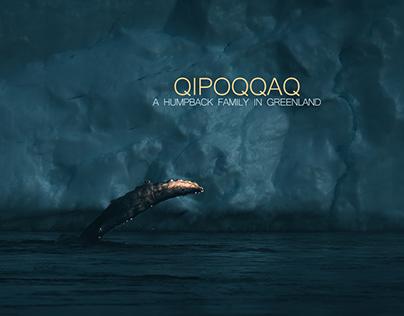 Qipoqqaq - A humpback family in Greenland.
