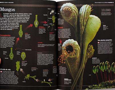 ilustraciones infograficas vectoriales