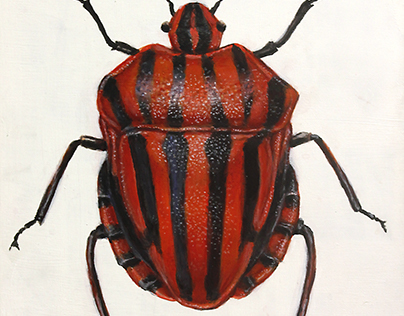 Italian Striped Beetle